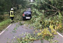 Photo of Verkehrsunfall durch umgestürzten Baum