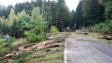 Photo of Baumfällarbeiten an der K 139 haben begonnen.