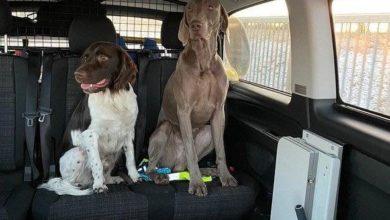 Photo of Gewahrsam mal anders … freilaufende Hunde auf der BAB 64 von Bundespolizei eingefangen